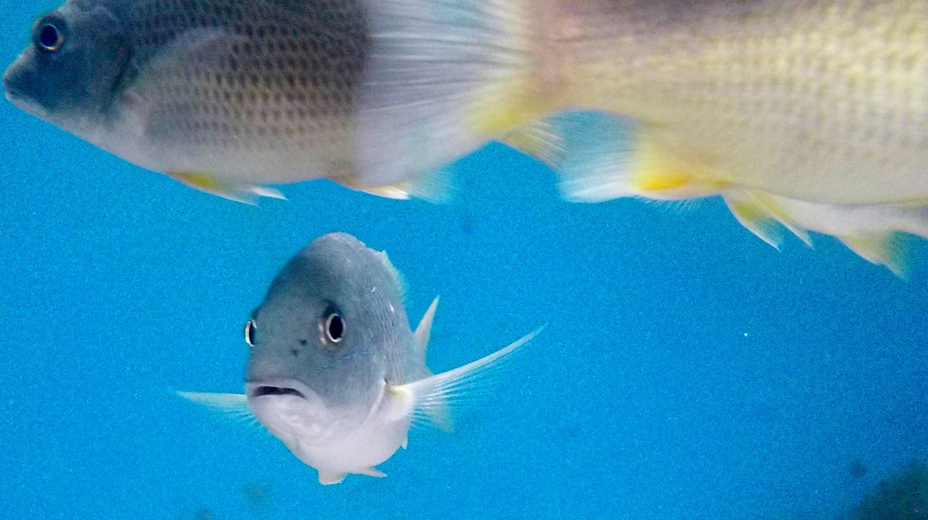 Vissen-3